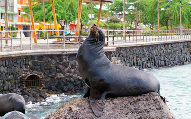 Galápagos busca reactivarse a través de planes turísticos