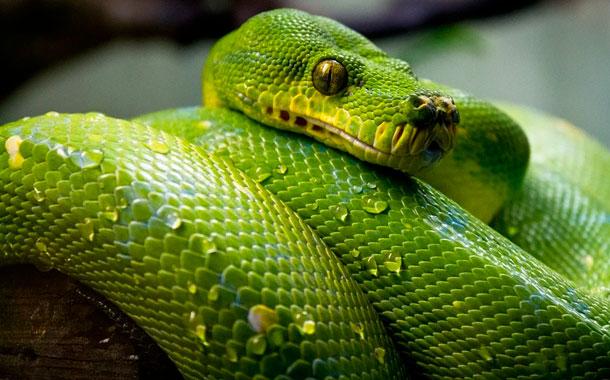 Hombre usa serpiente como mascarilla en autobús público