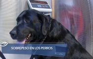 Sobrepeso en los perros