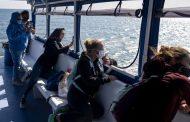 Reportan cada vez más avistamientos de ballenas en Nueva York