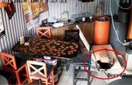 Un gato causa destrozos en un local de cervezas en Rusia